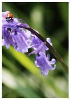 Shipley Park Ladybird by DawsonDesigns