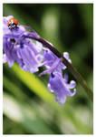 Shipley Park Ladybird