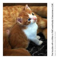The Kitten by doggj