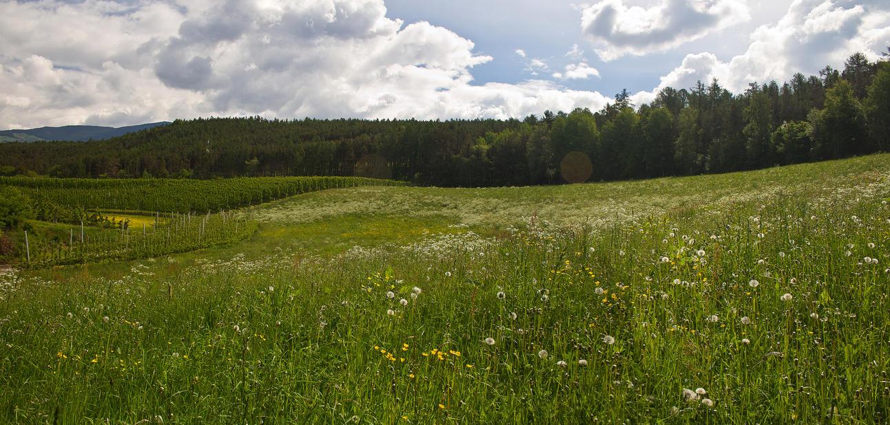 Grass Field By Jorago On Deviantart