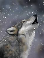Wolf by Matou31