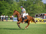 Horse and Rider - Gallop
