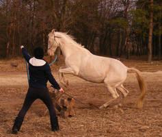 Perlino horse stock 7 by LadyAyslinn
