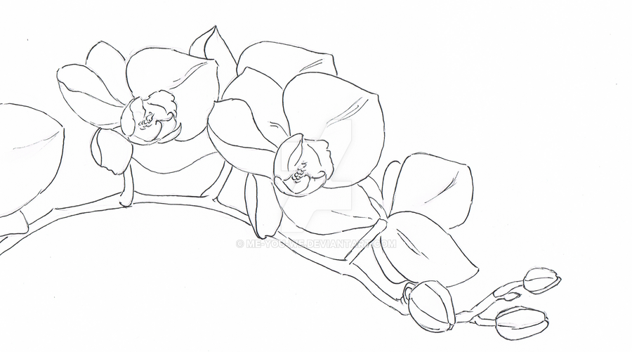 Orchid Flower Line Drawing : Orchid larissa lineart by me you we on deviantart