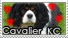 I love cavalier king charles by evilemmamalakian