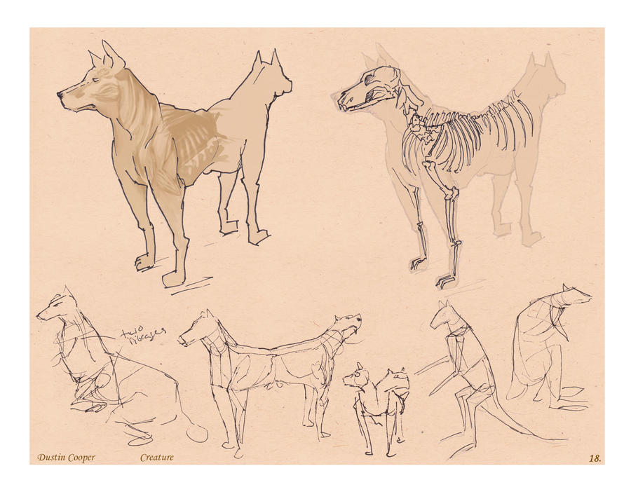 2 headed Dog creature - Comparative Anatomy by CatCouch on ...Three Headed Animal Drawing