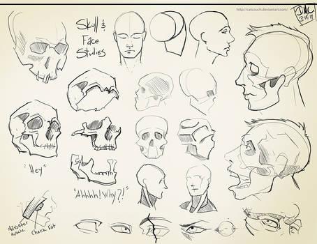Skull Studies