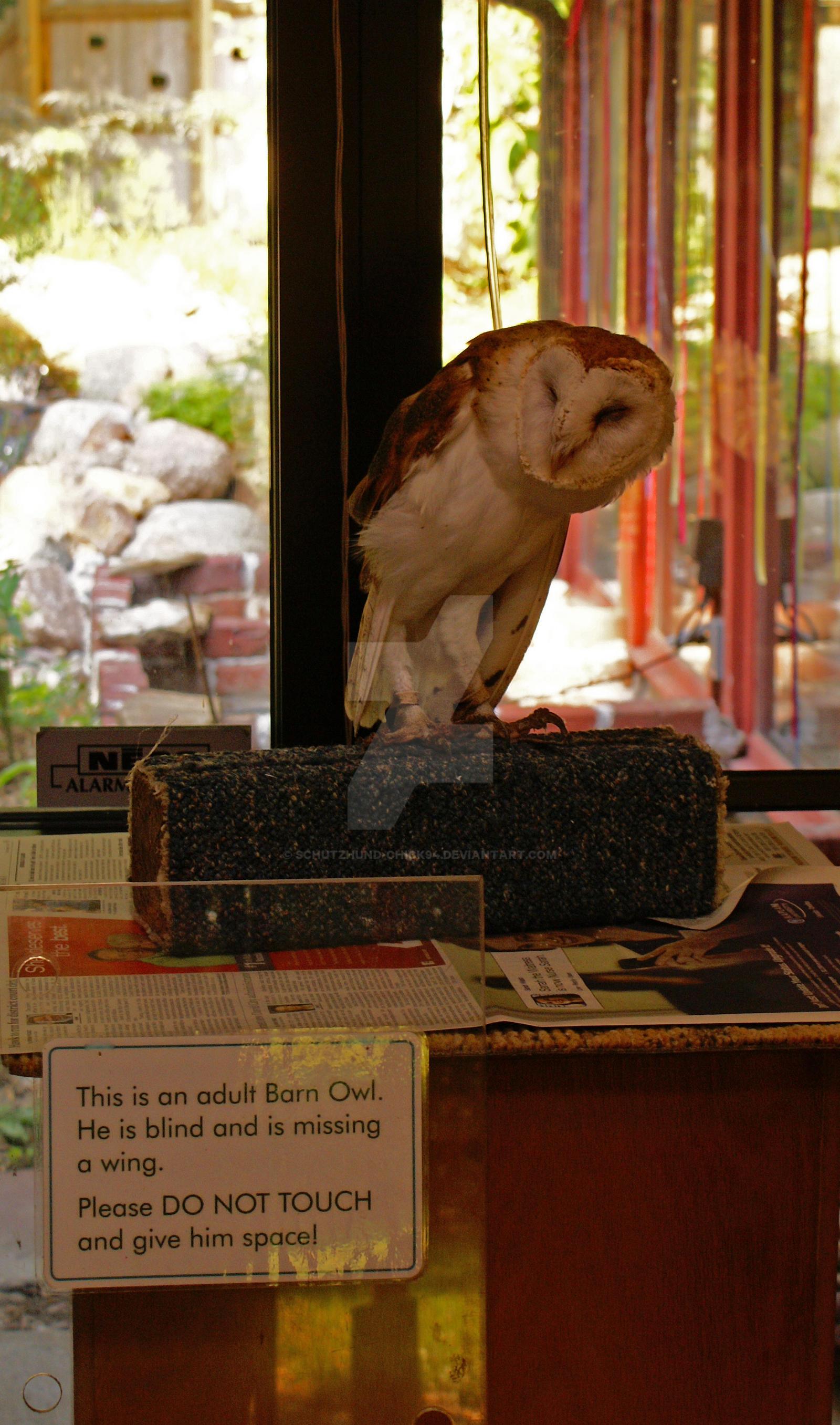 Unseeing Eyes By Schutzhund Chick94 On Deviantart