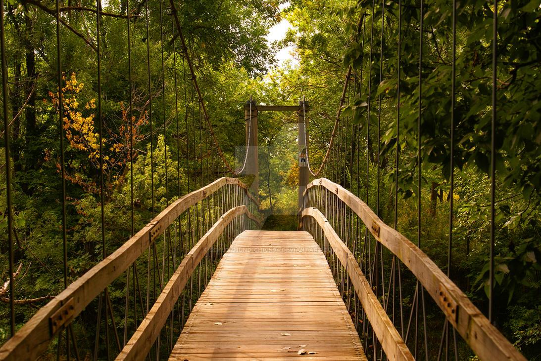 Bridge By Schutzhund Chick94 On Deviantart