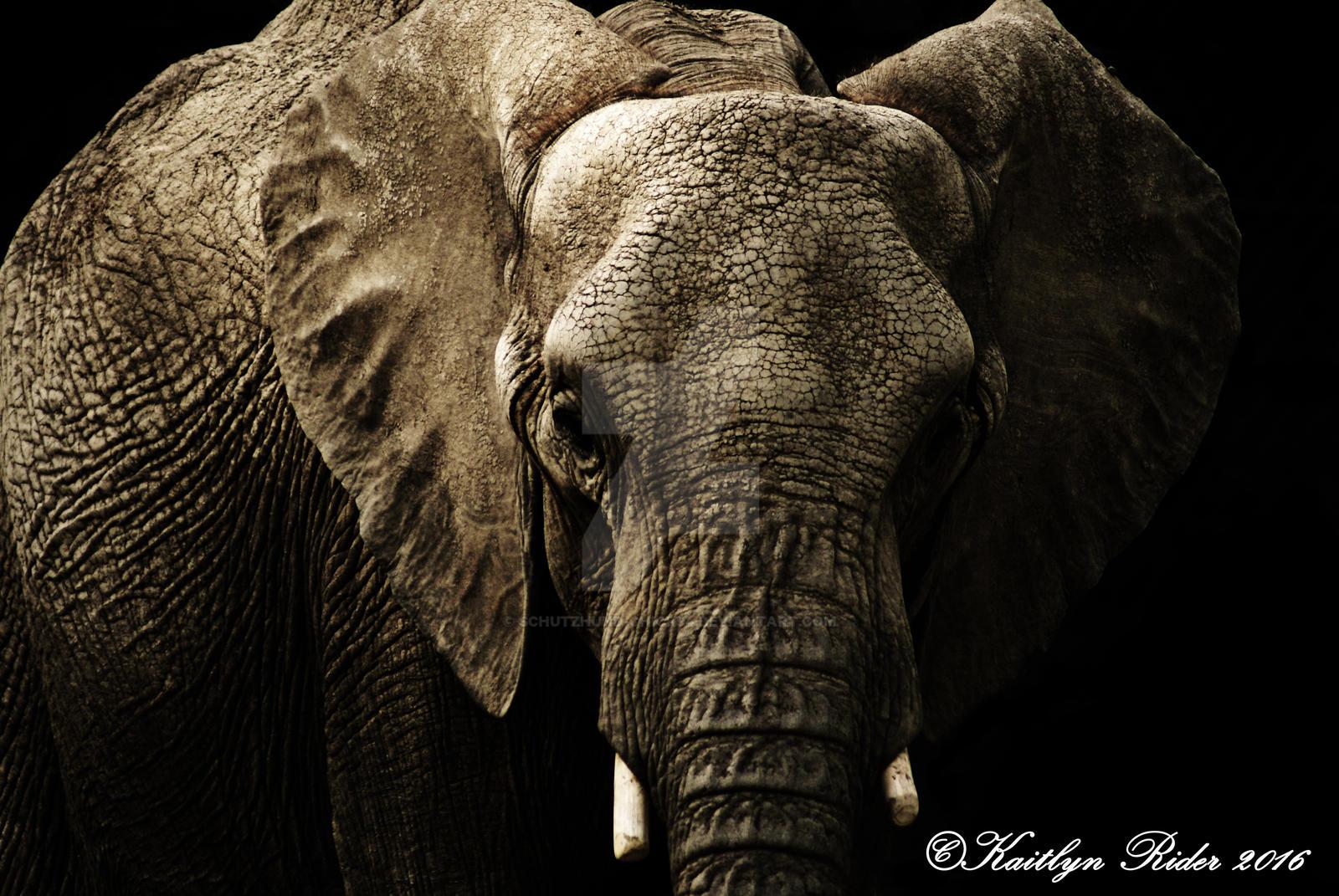 Fabulous African Elephant wallpaper by Schutzhund-Chick94 on DeviantArt JC95
