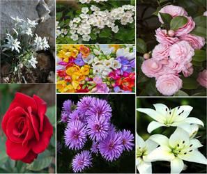 Love Beyond Magic Flower Board