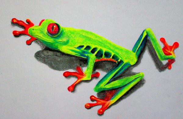 Frog by nicostars