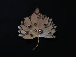 Fall- Gel pens on Leaf + youtube video by NicoDauk