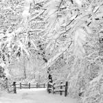 Entering Winter Wonderland. by incredi