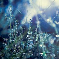 Blue wind. by incredi