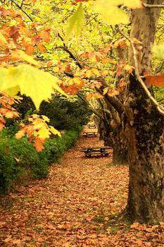 Street of Autumn.