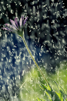 When the rain meets the flower