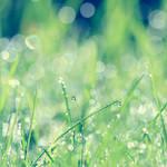 Sonatina of June. by incredi