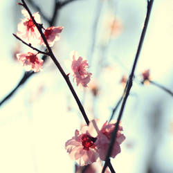 My spring. by incredi