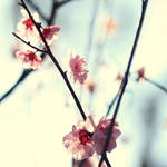 My spring.