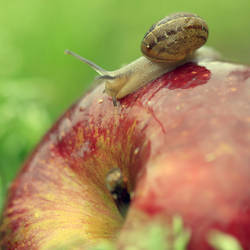 The very hungry snail.