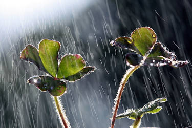Singing in the rain. by incredi