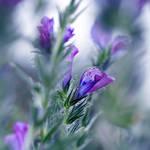Pretty in purple..