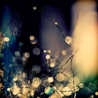 When fairies dance. by incredi