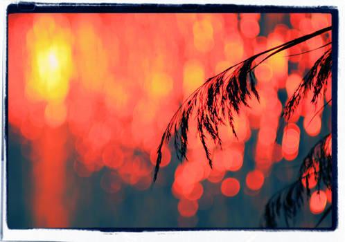 Sunset  fairies.