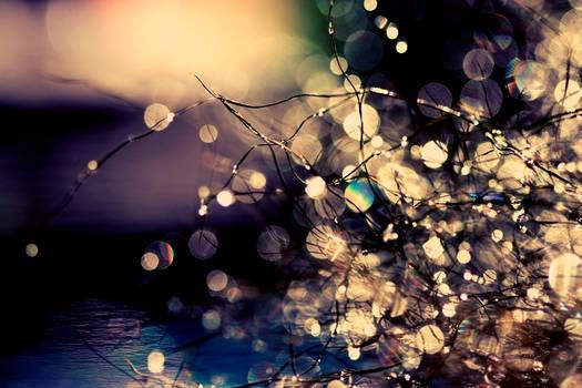 Where fairies dream. by incredi