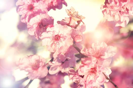 Spring Symphony.