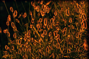 Symphony in orange. by incredi