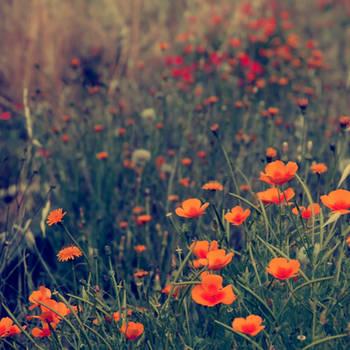 Field of dreams. by incredi