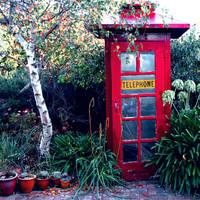 Red in the garden.