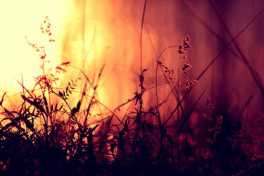 Summer nights. by incredi