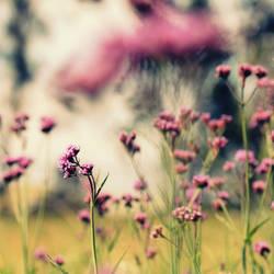 Magic of Pink by incredi