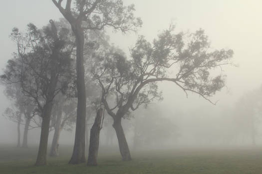 Foggy moods