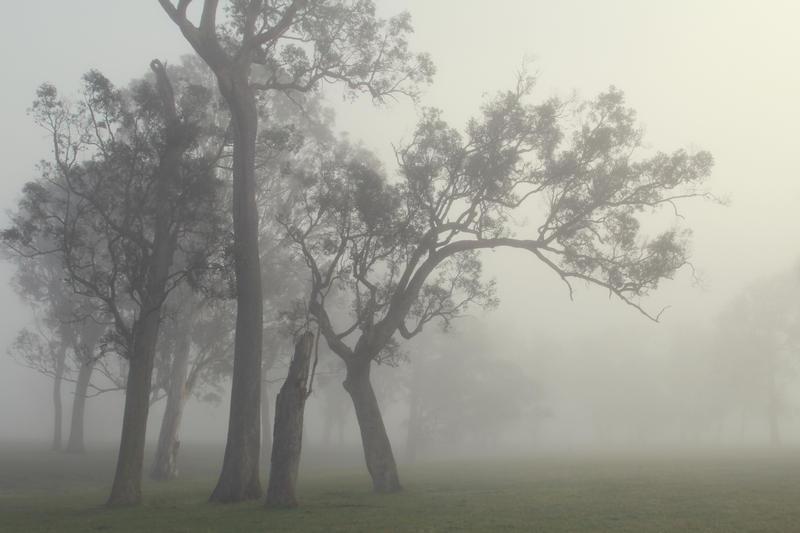 Foggy moods by incredi