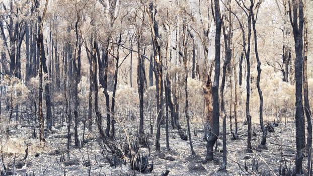 Burnt III