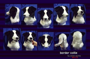 Border collie head