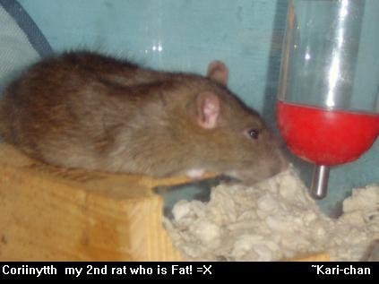 coriinyth my rat by fuzzledreams