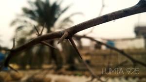 Lumia 925 Photography by BalochDesign