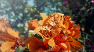 Close-up Photography with Lumia 925