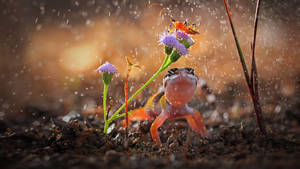 Gecko and insect on rainy day