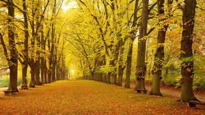 Herbstliche Allee Dinkelsbuhl Bayern