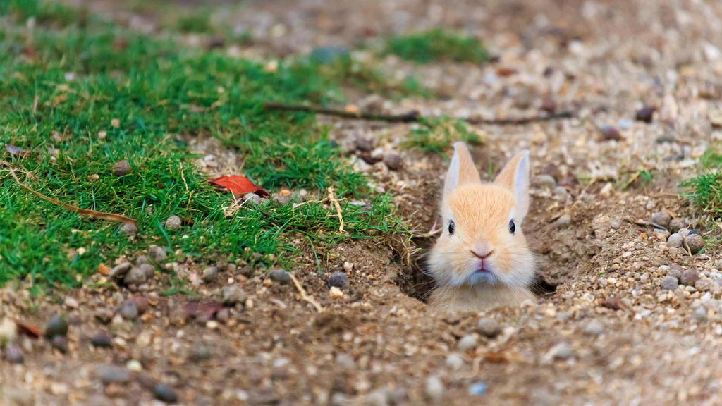 Baby feral domestic rabbit by BalochDesign