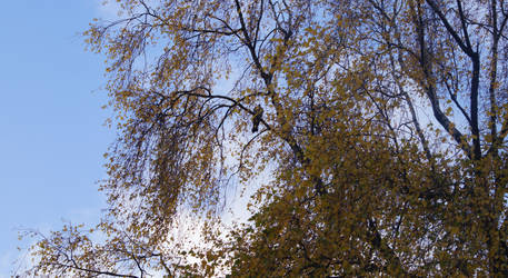 Autumn tree with pigeon by chetje