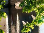 Sunshine on water