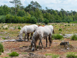 a domestic horse that has returned to the wild by chetje