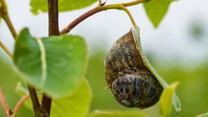 Snail shell on leaf
